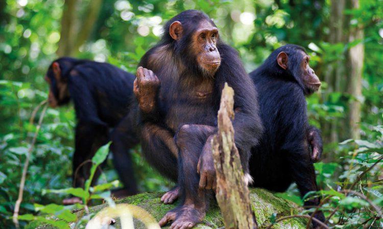 12 Days Rwanda Adventure Safari
