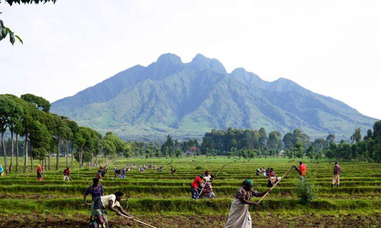 3 Days Mount Sabyinyo Volcano Hike